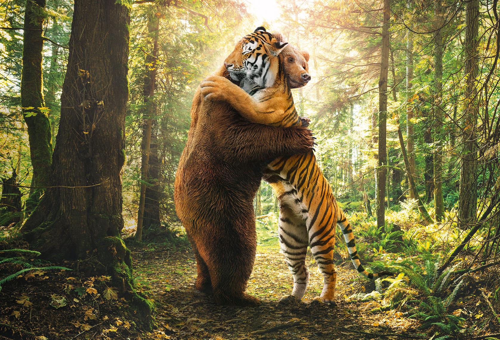 Bär und Tiger